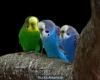 Parque ornitológico: Avecillas