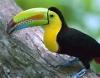 denada2 - Birdrama criador de pájaros