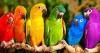 paola1d - Birdrama criador de pájaros