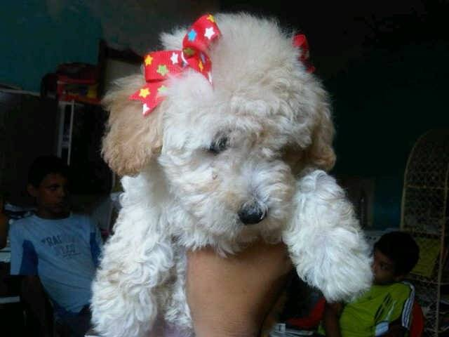 Perro - (7 meses)