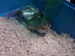 Ratón - (2 meses)